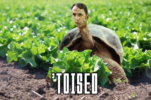 will self tortoise