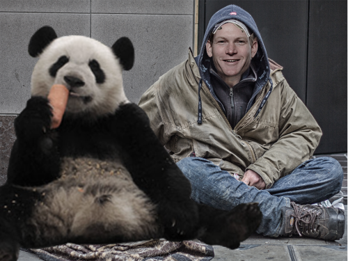 jeremy brown panda homeless