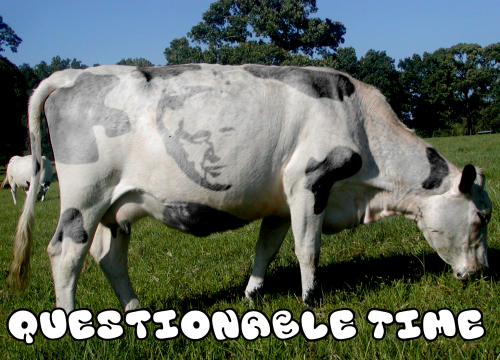 questionable time 93 david dimbleby cow